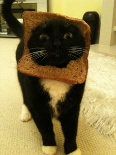 White whiskers on a black cat face always look so bizarre!!  Not to mention the wheat bread....