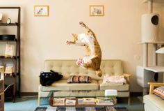 These cats were caught in the middle of making a huge jump and they are FLAWLESS.