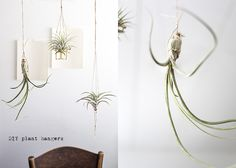 """Magnificent Tillandsia Air Plant - """"I blogged about finding them last summer at Handemade Supermarket in Berlin. I bought 2 of them from lovely ladies of Till Herba Caeli and travelled with them by train back to home Finland. Last October I told you some DIY tips to make home for them. Now I just want to show you Tillandsia's beauty with hint of a great DIY made of bottle stopper wire."""""""