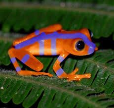 Image result for tree frogs images