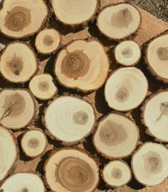 50 assorted Juniper tree slices- to wooden craft discs/tree cookies/wood blanks- unsanded- Rustic wedding, table confetti, centerpiece Home Goods Wall Decor, Home Decor Mirrors, Diy Home Decor Projects, Diy Home Crafts, Home Decor Furniture, Furniture Stores, Ocean Home Decor, Disney Home Decor, Home Decor Catalogs