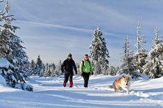 Dans Lanaudière    Les sentiers de la Presqu'île à Le Gardeur offre un terrain de marche débutant de 11 kilomètres qui a la particularité de rendre pitou très heureux…puisqu'il y a le droit d'y déambuler sans laisse. Renseignements : http://lessentiers.net/    Le sentier du Mont Ouareau est une portion du Sentier National, sur lequel les chiens sont d'ailleurs presque toujours admis pour la randonnée. À 685 mètres, le mont Ouareau offre un superbe panorama pour une ascension de 240