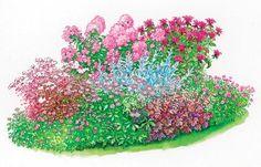 Staudenbeet Purpurglöckchen Zeichnung