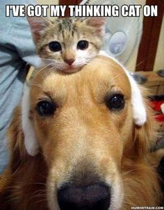 Definitely looks like what goes on at my house. Three cats one dog, and voila three different hats!