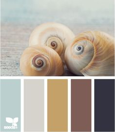 shell tones. I want my house done in these colors. Perfect for any season. Great combo!