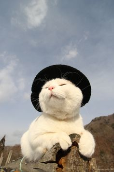 ** Radical hat on the right cat. Cute Funny Animals, Cute Baby Animals, Animals And Pets, Cute Little Kittens, Kittens Cutest, Pretty Cats, Beautiful Cats, Costume Chat, Gatos Cool