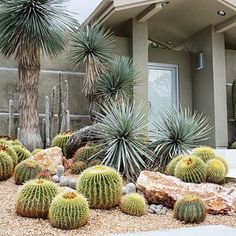 9 Ways to Design with Cactus Cluster them amongst boulders Southern California's rare rains provide Front Yard Decor, Front Yard Design, Low Water Landscaping, Front Yard Landscaping, Landscaping Ideas, Patio Ideas, Palm Springs, Desert Backyard, Cactus Decor