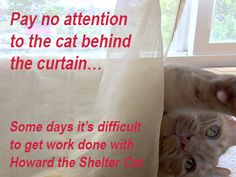 Working from home presents a few challenges. #askthehomediva #Howardthesheltercat #cats