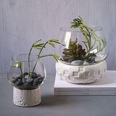 Geo Ceramic + Glass Terrariums #westelm