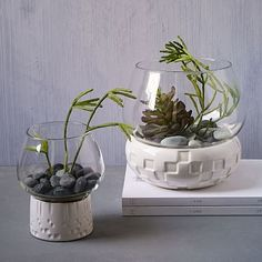 Geo Ceramic + Glass Terrariums #westelm