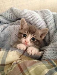 TOP 30 Cats and Kittens Pics | Funny Cat | DomPict.com