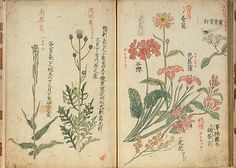 Japanese botanical: With 6 flowering plants.