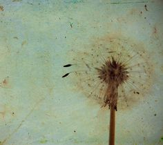 Vintage Dandelion - 5 X 7 Photography Print Photo - Dandelion Texture Green Blue on Etsy, Sold
