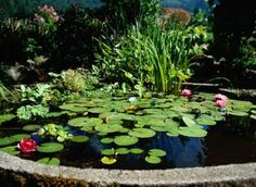 How to Make an Outside Fish Pond in a Large Pot