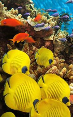 Bright Beautiful And Overflowing With Life Coral Reefs Are Among The Most Incredible Natural Wonders In World