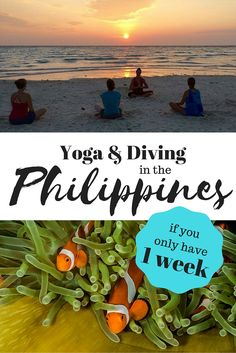 Want to combine both Yoga & Diving during your vacation in the Philippines? Here's our guide on where to go if you only have 1 week to spend! Yoga Holidays, Best Scuba Diving, Gentle Yoga, Goal Planning, Where To Go, Schedule, Philippines, Ocean, Island