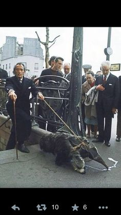 Salvador Dali and his Anteater walking out a New York subway in 1975. Doesn't get cooler than this!