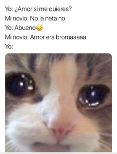 Top 5 cats in 2019 Funny Spanish Memes, Spanish Humor, Stupid Funny Memes, Spanish Quotes, Love Phrases, Love Words, Amor Quotes, Cute Love Memes, Funny Short Videos