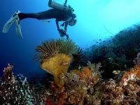Places in Halmahera Mandatory Visited Part 2 Places, Lugares