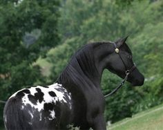 I want to know who this horse is!!!