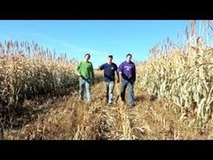 "Farmer Style (Gangnam Style Parody) I prefer The Peterson's version to the original. Also check out their other you tube videos. They have another music video, outtakes, plus some actual ""how'd they do that"" on the farm videos."