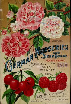 seeds_catalogs-04958 - 091-Climbing Rose, Cherry, Raspberry [3397x4937] - transfer pre-1923 collection ArtsCult.com decoration royalty century 1900s free public blooming ArtsCult orchidacaea books botany beautiful flower Edwardian scan flora Pictorial Artscult 1800s fabric engravings pages 18th clipart nature art pack commercial domain lithographs illustration high picture supplies 300 dpi vintage paintings nice Victorian Graphic  botanical orchid masterpiece Paper natural old 1700s…