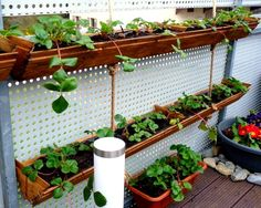 DIY Vertical Container Strawberry Planters