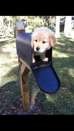 Can't wait for the day I find this adorable puppy in my mailbox! #CutePuppy. not likely anytime soon.