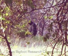 Possible Wood Ape Photos From Central Oklahoma - unknown animals Best Mysteries, Ancient Mysteries, Creepy Catalog, Bigfoot Photos, Lago Ness, Finding Bigfoot, Bigfoot Sightings, Oklahoma, Bigfoot Sasquatch