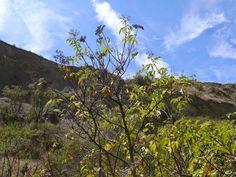 The Indigo Vat: Hands & Hearth: Elder In the Heart of the Volcano