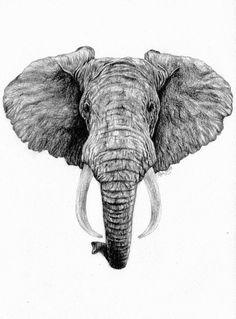African Elephant by kelysea.deviantart.com on @deviantART