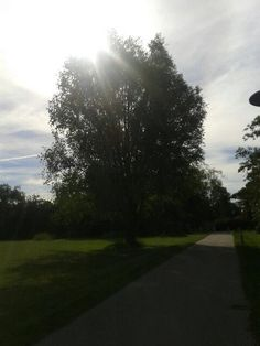 The Sun and a tree....