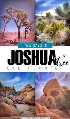 Best Two Days in Joshua Tree National Park - Resist the Mundane
