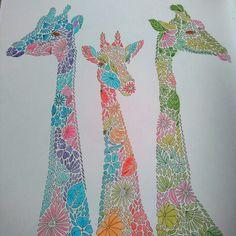 Millie Marotta's animal kingdom giraffes #adultcolouring #giraffe #milliemarotta #animalkingdom