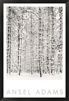 Ansel Adams | Pine Forest In The Snow, Yosemite National #photography #nature #art