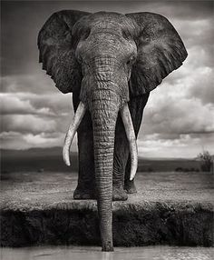 Another photograph of an elephant by Nick Brandt - elephants are beautiful animals to photographs, and have so much character.