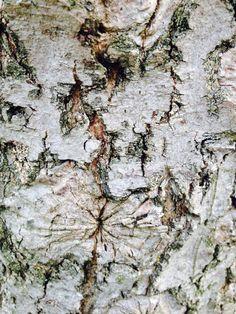 Detailed tree bark