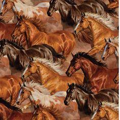 Amazing Running Mustangs.