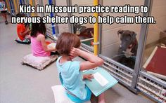 I love that the dogs are sat listening... A great thing for the dogs and kids
