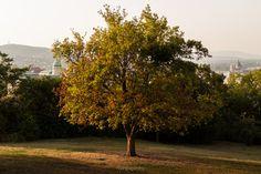 Un claro en el bosque que rodea a La Citadella, coronado con un árbol que me pareció hermoso, y con esa luz dorada del atardecer.  Escuchando: The Time is Now - Moloko