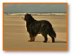 01-11-2013-04 senna schiermonnikoog