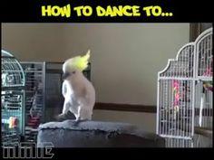 Birds dance to music genres