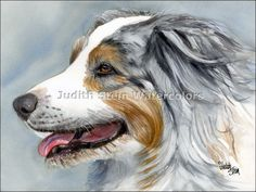 Selections from the portfolio of Judith Stein watercolors featuring a variety of dogs. Dog images are in AKC Group Categories: Sporting Dogs, Houn, Working, Terrier, Toy, Non-Sporting, Herding and Miscellaneous.