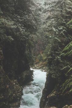 forest • travel • trees • rainforest • river • wanderlust