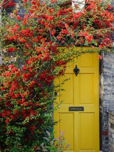 A pale yellow door has no trouble standing out beneath piles of climbing greens. See more colorful doors >>