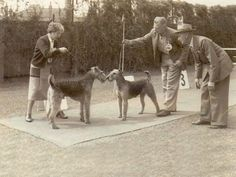vintage dog show - Airedales sparring