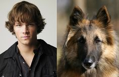 """Sam Winchester   The Cast Of """"Supernatural"""" As Dogs...This is sooo awesome!  They did a really good job!"""