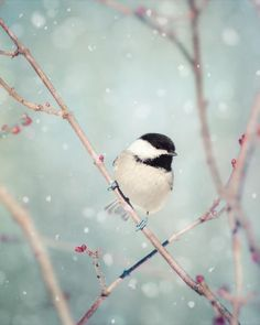 Winter Decor, Winter Photo, Bird Photo, Chickadee, Winter Art, Snow Photo, Nature Photography, Winter Bird Print, 5x7 8x10 11x14 16x20 Print