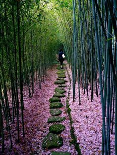 Walk Among the Bamboo ~~ Houston Foodlovers Book Club