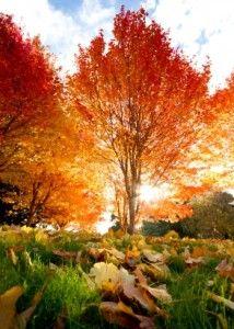 Autumn Scene 214x300 10 Easy Ways to Prepare Your Property In Autumn